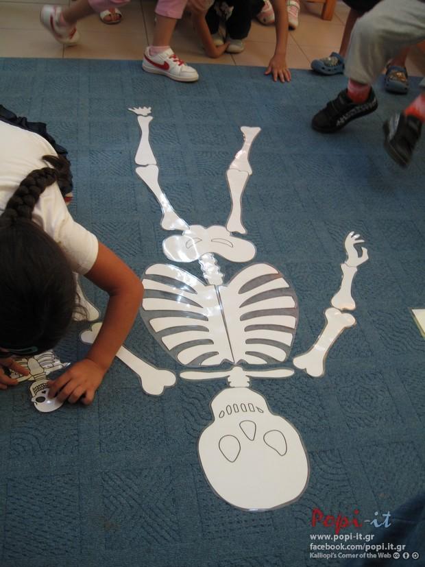 Δραστηριότητες για τον σκελετό